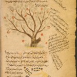 1-Arabic_botanical_treatise_thumb